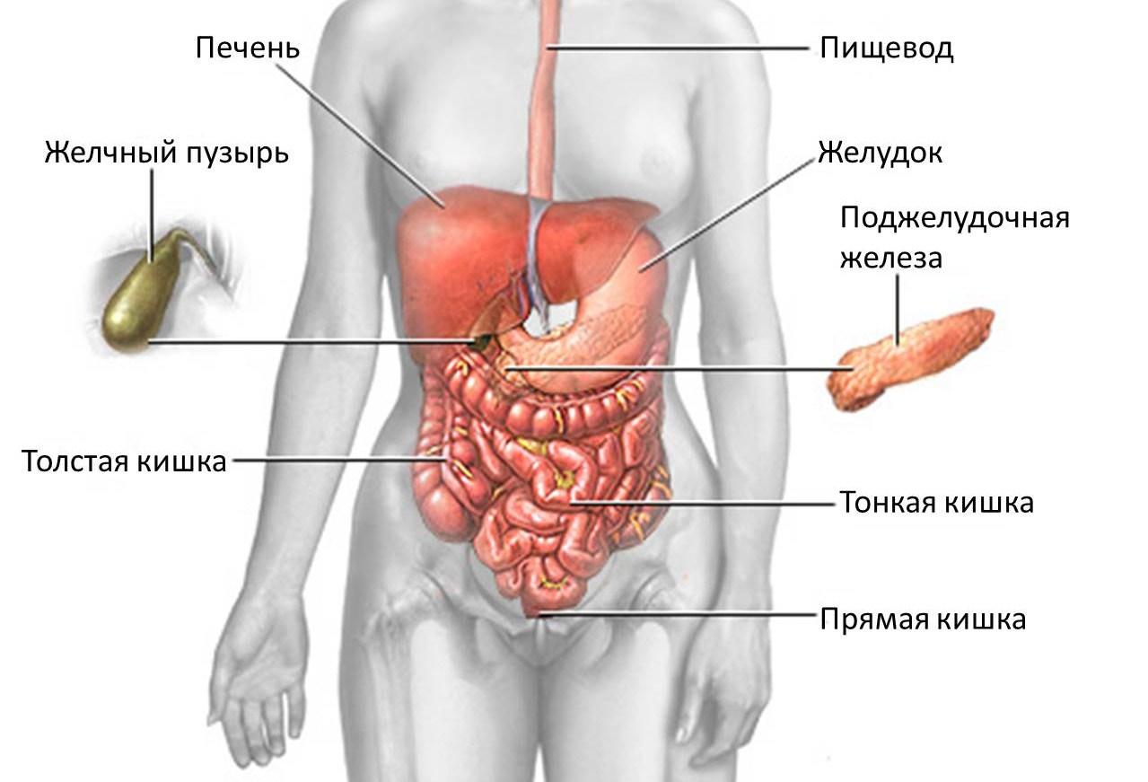 Симптомы заболеваний печени у мужчин