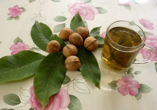 отвар из листьев грецкого ореха