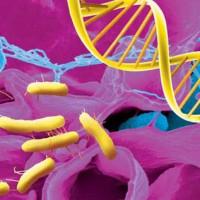 Ферменты желудка –назначение и роль в пищеварительном процессе