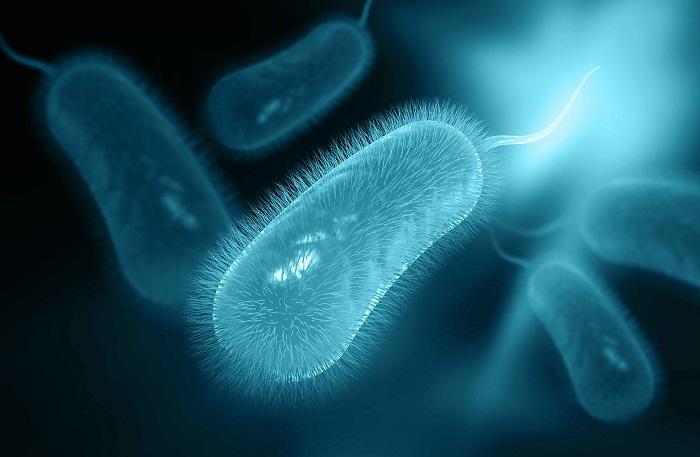 Очаговый гастрит бактерии Helicobacter pylori