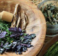Какие травы при гастрите желудка можно использовать в лечебных и профилактических целях?