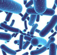 Кишечная инфекция: симптомы и лечение у взрослых