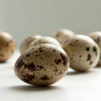 Перепелиные яйца при гастрите: польза, правила употребления