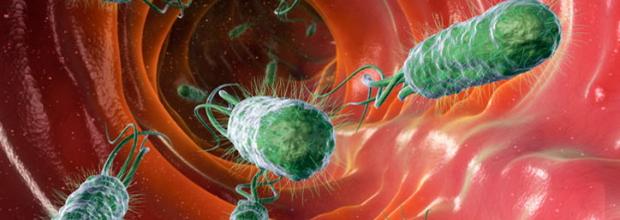 диагностика заражения бактерией хеликобактер пиллори