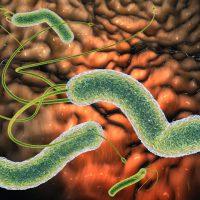 Чем лечить хеликобактерную инфекцию в желудке: доступные и эффективные методы