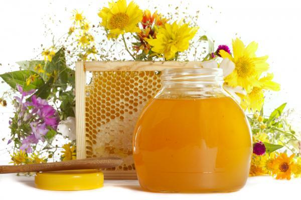 Лечение гастродуоденита медом