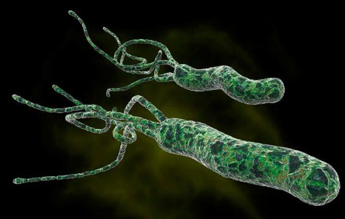 Helicobacter pylori причины заражения