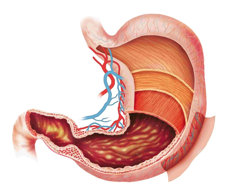 Препилорический отдел желудка