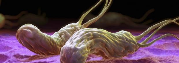 Эрадикация хеликобактер пилори: схема лечения, как уничтожить бактерию.