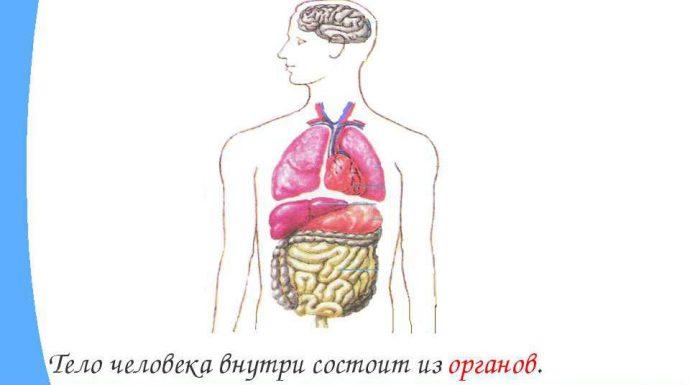 тело человека внутри