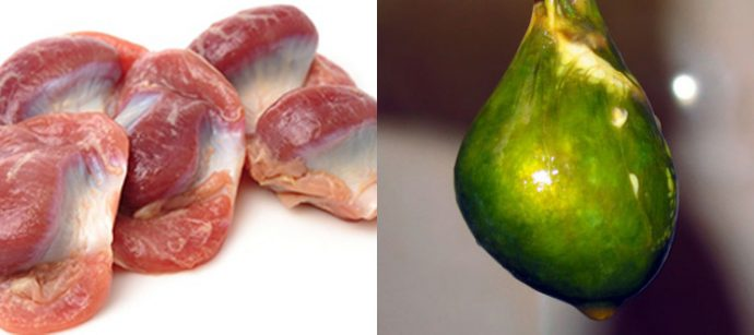 куриные желудки и желчь