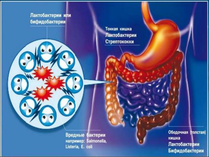 ферменты в кишечнике
