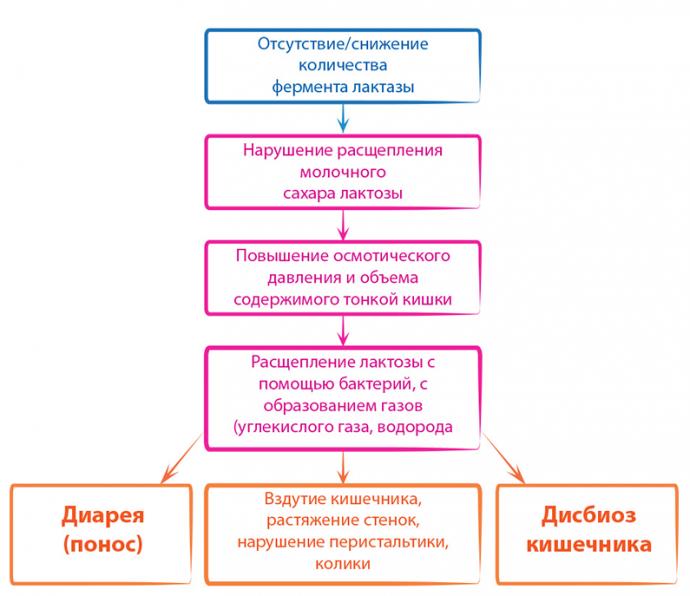 Симптомы лактазной недостаточности