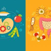 Препараты для нормализации микрофлоры кишечника
