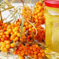 Применение и свойства облепихового масла