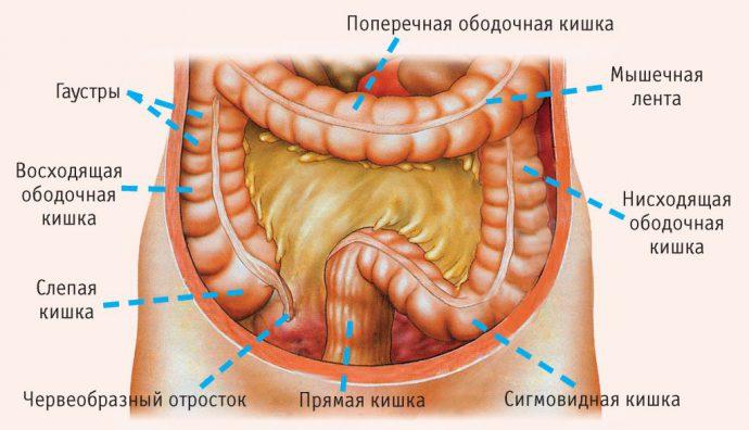 кишечник
