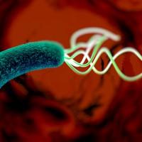 Как определить наличие в организме Helicobacterpylori