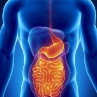 Каскадный желудок – что это такое?