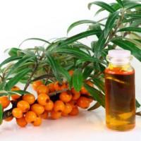 Облепиховое масло для желудка – лечебные свойства