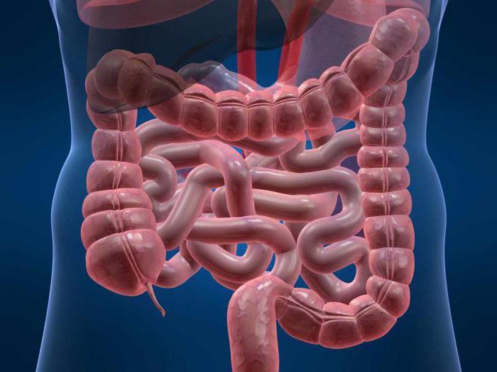 Причины урчания в животе кишечник