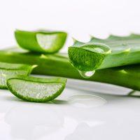 Использование сока алоэ для лечения желудка