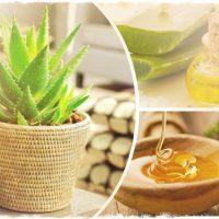 Использование алоэ с медом для лечения желудка