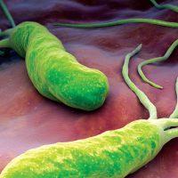 Схема лечения хеликобактер пилори: эрадикация антибиотиками
