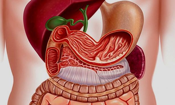 сколько времени переваривается пища в желудке