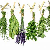 Лечебные травы, понижающие кислотность желудка