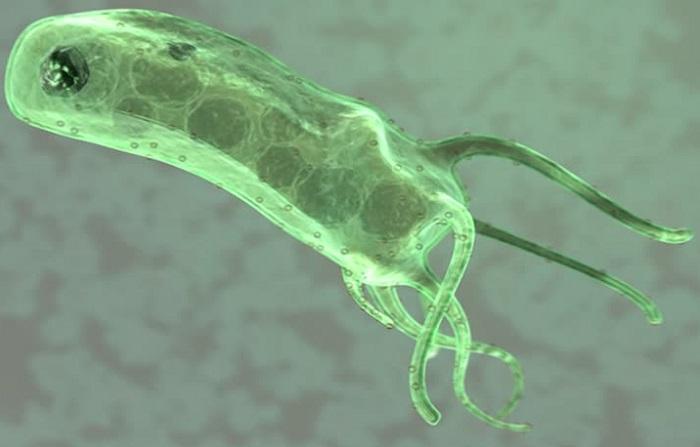 симптомы Helicobacter pylori