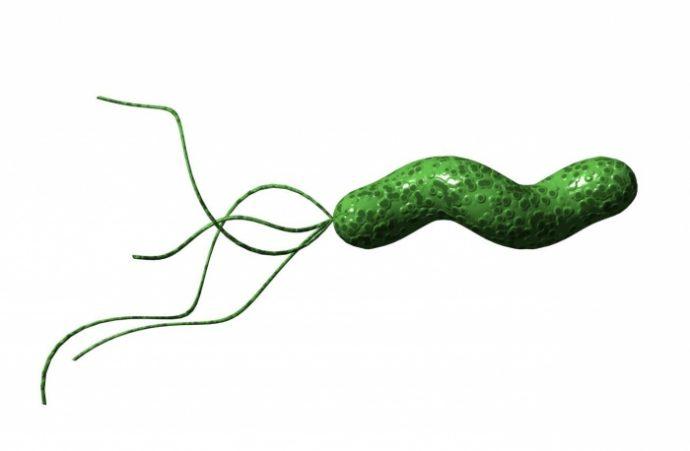симптоматика заражения бактерией хеликобактер