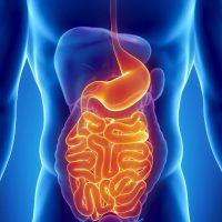 Разновидности заболеваний желудка: симптомы и лечение