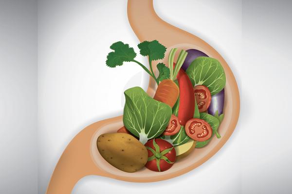 пища в желудке