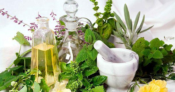 лечебные травы для желудка