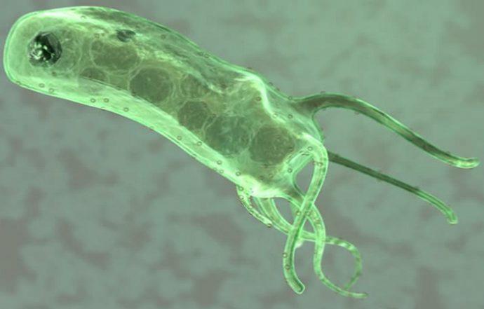 что такое Helicobacter pylori