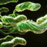Бактерия Хеликобактер пилори: лечение и диагностические методы