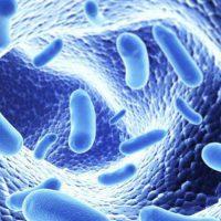 Жирный кал у взрослого: причины, диагностика, лечение