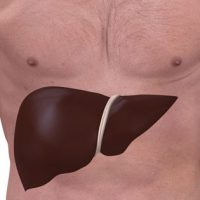 Причины и симптомы гепатомегалии печени: лечение и профилактика