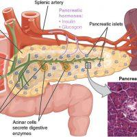 Болит поджелудочная железа: причины, диагностика, лечение
