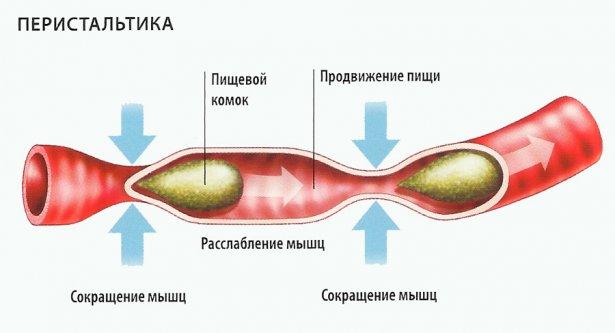 нарушение перистальтики кишечника