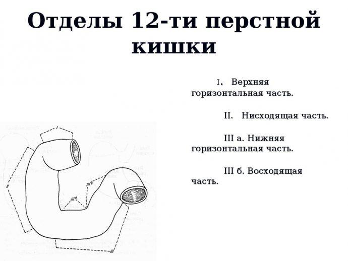 12-ти перстная кишка
