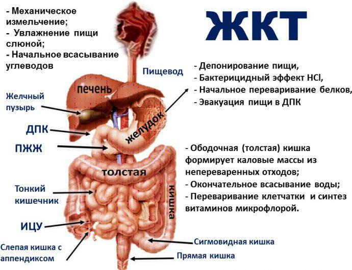 Нарушения в работе желудочно-кишечного тракта
