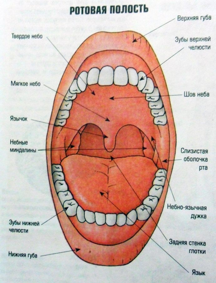 Рот человека