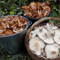Признаки отравления грибами: первая помощь и лечение