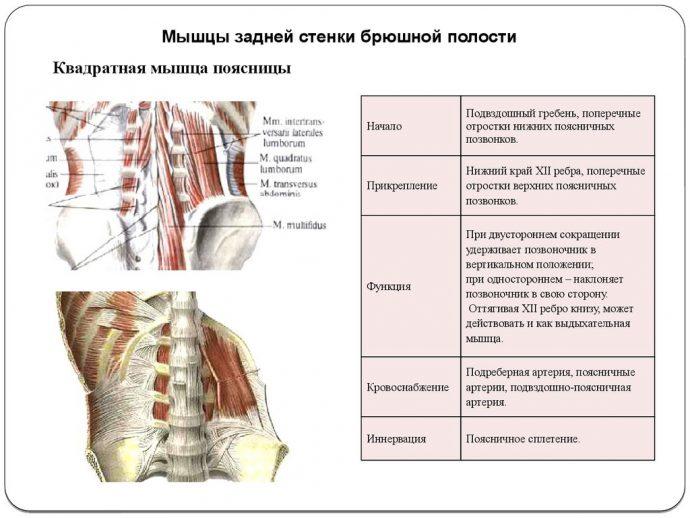 воспаление мышечных нервов
