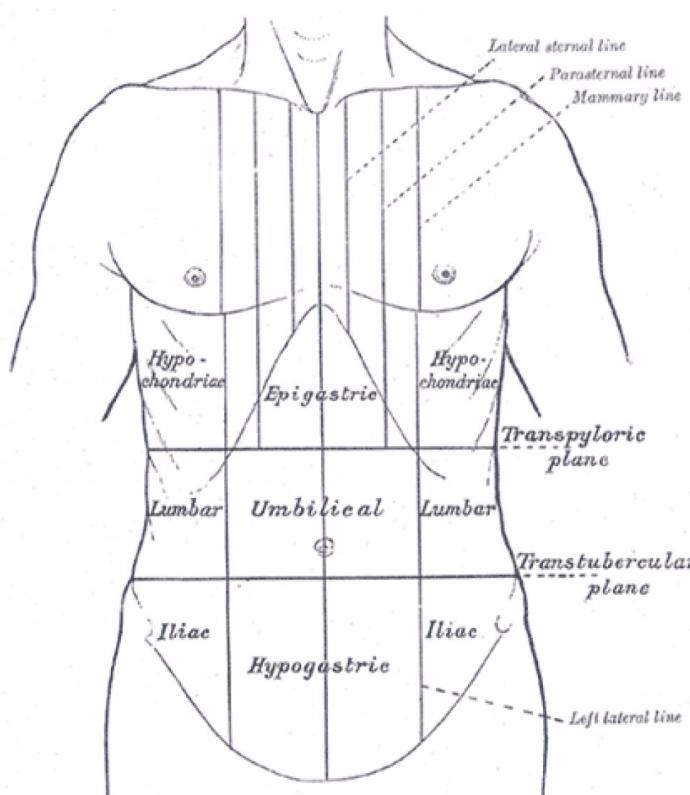органы в зоне эпигастрия