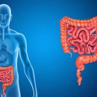 Симптомы дисбактериоза у взрослых, методы лечения