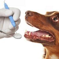 Удаление зубного камня у собак цена